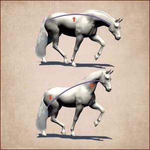 W jaki sposób koń nosi jeźdźca